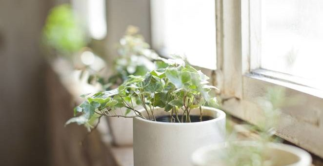 5 health benefits of houseplants